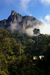 A camp is nestled in tropic rain forest, with a steep mountain peek directly behind it.