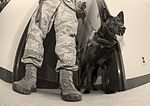 Canine teams hound victory at Top Dog competition 160516-F-RA202-188.jpg