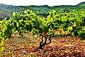 Capçaleres del Foix - 98.jpg