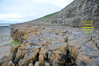 Carboniferous Limestone - Carboniferous Limestone exposed at Ogmore-by-Sea, Wales. Carboniferous/Jurassic unconformity.