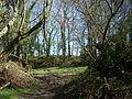 Castle Rings, Donhead St Mary 09.JPG