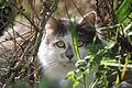 Cat 9169 (9367206559) (3).jpg
