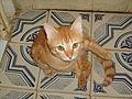 Cat bocman.jpg
