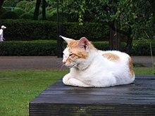Cat on table.jpg