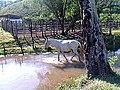 Cavalo, Brejões-BA.jpg