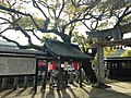 Celtis sinensis of Okinohata Suiten Shrine.JPG