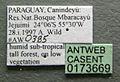 Cephalotes clypeatus casent0173669 label 1.jpg