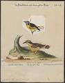 Certhiola flaveola - 1700-1880 - Print - Iconographia Zoologica - Special Collections University of Amsterdam - UBA01 IZ19000429.tif