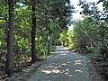 Chemin des Bruyères de Montubois (forêt de Montmorency) - panoramio.jpg