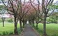 Cherry-tree Walk - geograph.org.uk - 1282986.jpg