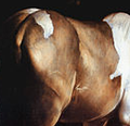 Cheval (La conversion de St Paul).png