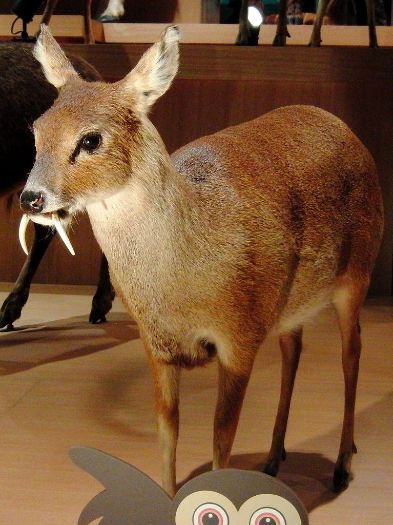 Chinese Water Deer Food Web