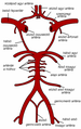 Circle of Willis-hu.png