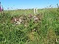 Clawdd ger Carreg y Barcud, Trelerw, ger Tyddewi - near St David's, Pembrokeshire, Wales 17.jpg