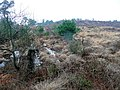 Cleared forest - geograph.org.uk - 1770384.jpg