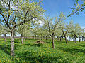 Cleebourg-Arbres fruitiers.jpg
