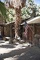 Coachella Valley Preserve VC 9241.jpg
