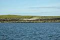 Coastal erosion, Holm of Faray - geograph.org.uk - 1435794.jpg