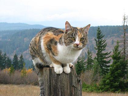 Gigantické rušne (Megatransporty / Veľké presuny / Gigantické (doplnenie textu: / text adding: Čierna mačka, biely kocúr, Černá kočka, bílý.