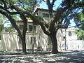 Coco Grove FL Vizcaya across street01.jpg