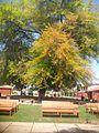 Codegua, Chile - panoramio (1).jpg