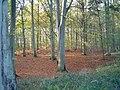 Collyweston Great Wood - geograph.org.uk - 84284.jpg