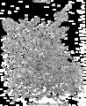 Consolea moniliformis Plantarum Americanarum Plate CXCVIII.png