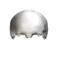 Coronal suture - close up - anterior view01.png