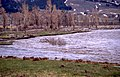 Cottonwood floating down the Lamar River, 3 of 3 (9db6983a-7e23-4536-8f38-b50812648893).jpg