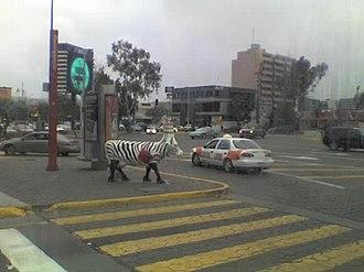 Zona Río - Image: Cow parade TIJ 1