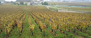 Criots-Bâtard-Montrachet in autumn.jpg