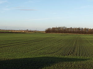 Row crop - Crop rows
