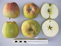 Cross section of Astrachan Large Fruited, National Fruit Collection (acc. 1927-017).jpg