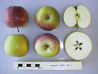 Cross section of Charlot, National Fruit Collection (acc. 1947-168).jpg