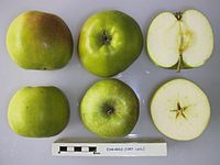 Cross section of Edwards, National Fruit Collection (acc. 1957-160).jpg