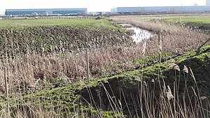 Erith Marshes - A view of Crossness Nature Reserve one of the fragments of the marshes that has remained undeveloped
