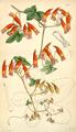 Curtis's Botanical Magazine, Plate 4337 (Volume 73, 1847).png