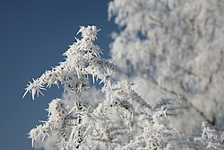 meaning of frost