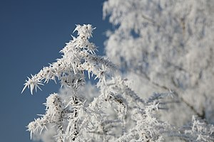 Hoar frost or soft rime on a cold winter day i...