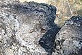 Dacian Fortress of Capalna 078.jpg