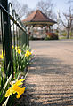 Daffodil and bandstand (6866430694).jpg