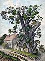 Dagobertseiche, 1830.jpg