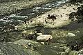 Darjeeling1980-055.jpg