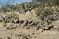 De San Rafael a la Noria de las Animas ,RAMOS ARIZPE COAHILA - panoramio (29).jpg