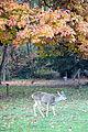 Deer - Lithia Park - Ashland, Oregon - DSC02692.JPG