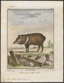 Dicotyles torquatus - 1700-1880 - Print - Iconographia Zoologica - Special Collections University of Amsterdam - UBA01 IZ21900209.tif