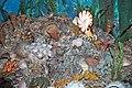 Diorama of a Permian seafloor - corals, brachiopods, coiled cephalopod, algae, gastropod (44791272745).jpg