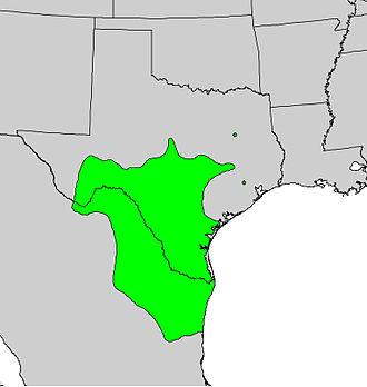 Diospyros texana - Image: Diospyros texana range map