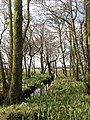 Ditch near Moy Castle - geograph.org.uk - 404214.jpg