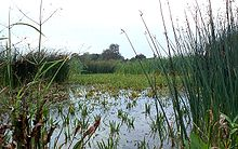 Слова связанные с болотом